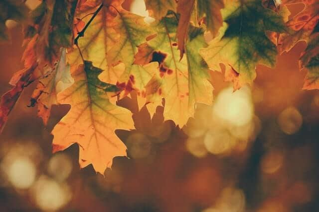 5 Reasons Why Fall Is The Perfect Time Of Year For Carpet Cleaning