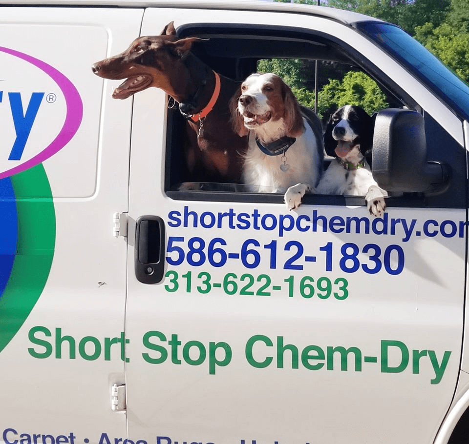 short stop chem dry carpet cleaning sterling heights mi
